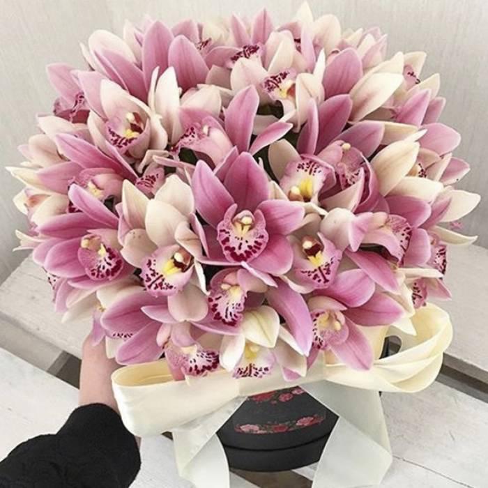 51 орхидея в коробке R009