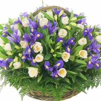 Большая сборная корзина ирисы и тюльпаны R009