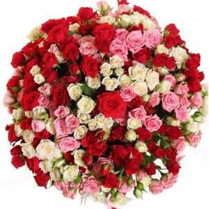 101 разноцветная кустовая роза R317