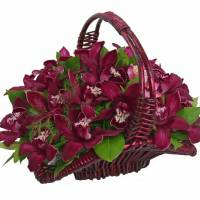 19 крупных винных орхидеи в корзине R285